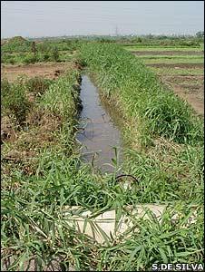 Wastewater canal (Image: Sanjini de Silva)