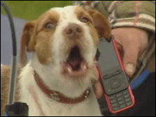Angus the Jack Russell, singing