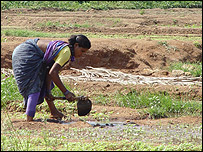 Mujer en India cultiva usando agua contaminada. (Foto: Sanjini de Silva/IWMI)
