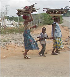 Women carrying firewood on the heads