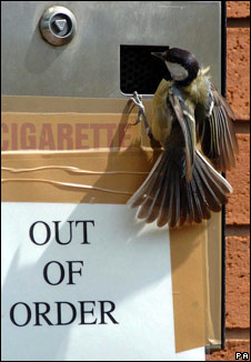 Great tit on nesting box