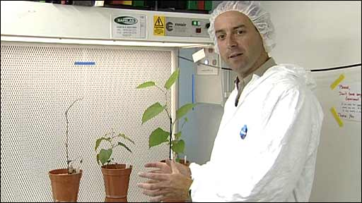 Dick Shaw with Japanese knotweed