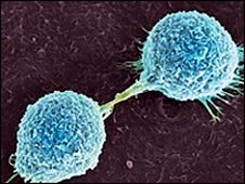 Skin cancer cells dividing