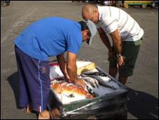 Fishermen examine their catch