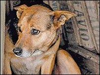 الأرجنتين: كلبة تنقذ طفلة رضيعة وتتبناها مع جرائها _44951386_316e06c0-72d0-464d-ba1d-91bbc37b2b50