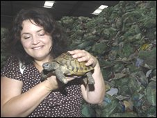 Ruth Jones with her tortoise