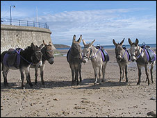 Best group of beach donkeys: Pic The Donkey Sanctuary