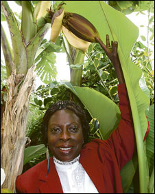 Novelette Childs with her banana plant (picture: County Times newspaper)