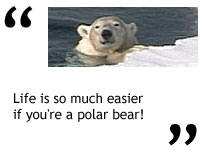 """Life is so much easier if you're a polar bear!"""