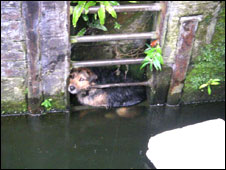 Dog before canal rescue