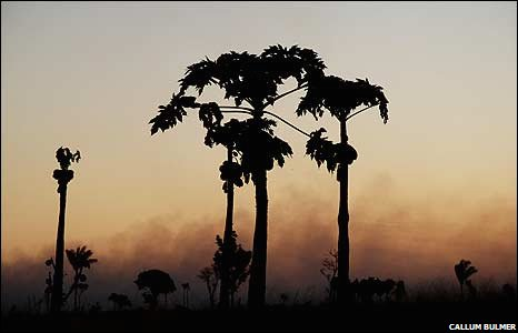 Trees silhouetted by distant fires
