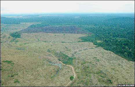 Cleared area of Amazon near Santarem