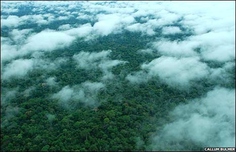 Vapour rising from Amazon rainforest