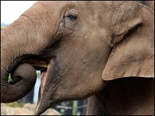 File photograph of an Asian elephant
