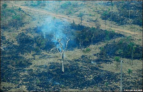 Burned out area of Amazon