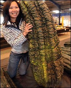 World's largest marrow (Western Daily Press/PA Wire)