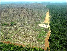 Deforested area of Brazil Amazon (Image: Callum Bulmer)