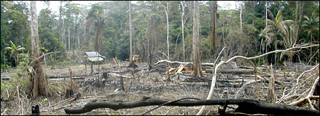 Burned rainforest