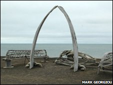 Whale arch