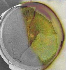 Diatom valve