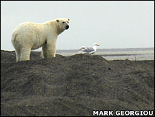 Polar bear on shore