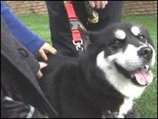 Nadia, Husky dog