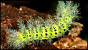 Caterpillar (Image: Alex Villegas)