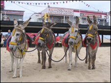 Great Yarmouth Donkeys