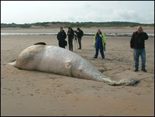 Whale carcass (Pic courtesy of John Tuttiett)