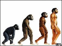 Representación de la evolución del simio al hombre