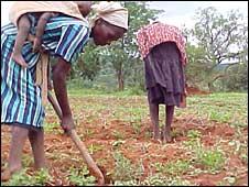 Subsistence farmers in Zimbabwe