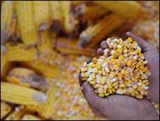 Handful of corn (Getty Images)