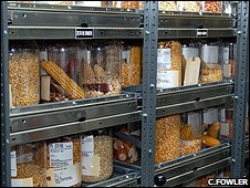 Seed collection (Image: Cary Fowler/GCDT)