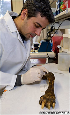 Nikos Poulakakis at microscope with tortoise leg