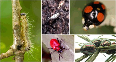 Clockwise from left: oak processionary moth caterpillar, horse chestnut leaf miner, harlequin ladybird, rosemary leaf beetle, red lily beetle