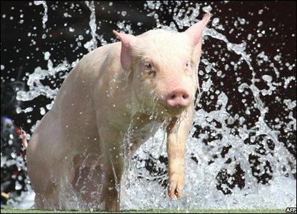 Miss Porky Pig, Melbourne, Australia, 23 September 2008