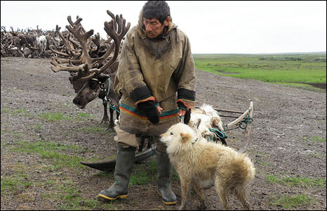 Dogs are an essential part of reindeer herding