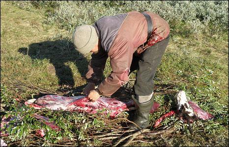 Skinning a reindeer