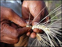 Agricultor con maíz