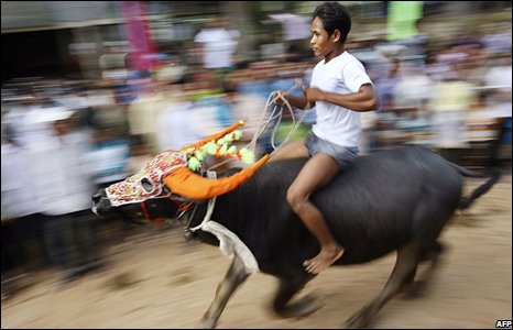 Cambodian man riding a buffalo in Kandal province