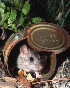 Mouse (SPL)