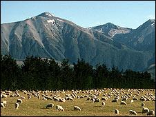 A farm in South Island, New Zealand