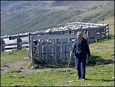A man tends cows in the mountains of Andorra