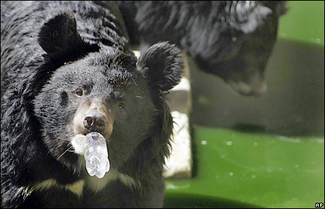 An Asiatic black bear drinks water from a bottle at a zoo in the Afghan capital, Kabul