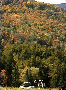 Trees change to Autumn colours in Warren, Vermont