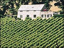 The Cornwall vineyard