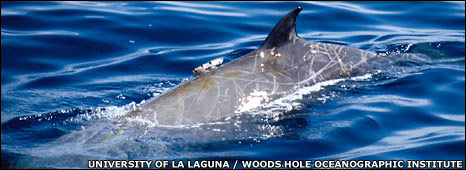 University of La Laguna / Woods Hole Oceanographic Institute - taken under permission issued by the government of the Canary Islands