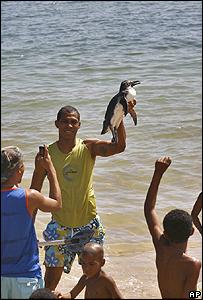 Rescatan a un pingüino en una playa de Salvador de Bahia, al noreste de Brasil