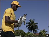 Guardacostas rescata a un pingüino en Cabo Frío, Brasil