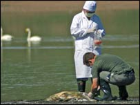 Patólogos buscando el virus de gripe aviar  (FOTO: WCS)